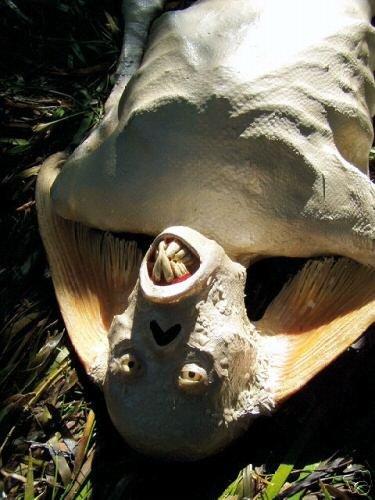 Extreme.by >> Сенсация! На Сейшельских островах нашли русалку!